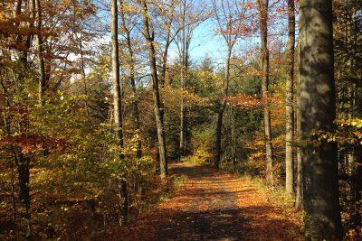 Herbstwaldidyll