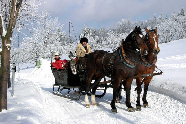 Romantische Pferdeschlittenfahrt